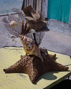 Seashell-Starfish Artwork