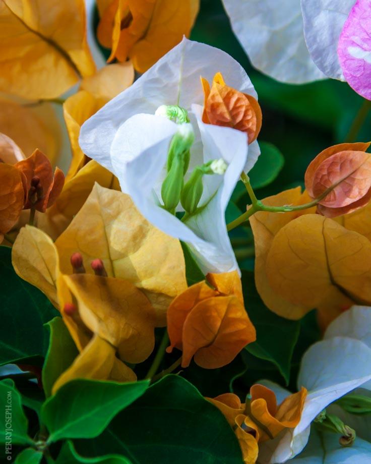 Briland Flora Rich in Color