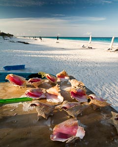 Conch Shell Beach Collection